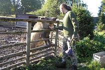 Místem, kde poraněná či handicapovaná zvířata nacházejí ochranu, je Pavlov u Ledče nad Sázavou.