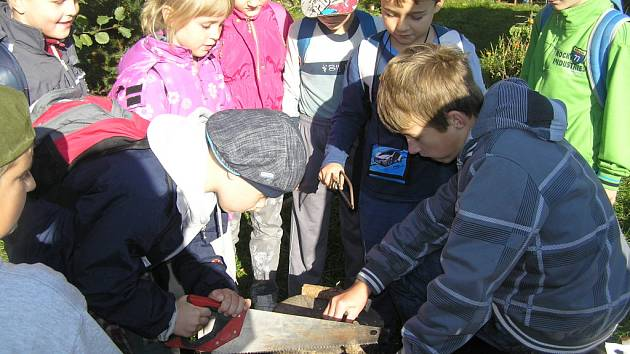 V rámci akce Den stromů si malí školáci z Přibyslavi mohli vyzkoušet práci s pilou. Při řezání dřeva pomáhali kamarádi ze sedmého ročníku.