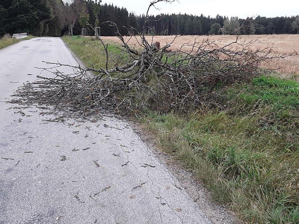 Hasiči na Vysočině zasahují u popadaných stromů.