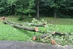 Strom, který ve čtvrtek pracovníci technických služeb preventivně pokáceli, byl označen jako rizikový a určený ke skácení už před několika dny. Středeční událost jen jeho pokácení urychlila.