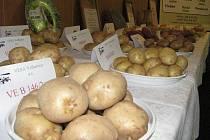 Polní den o bramborách se uskutečnil v Olešné. Ilustrační foto.