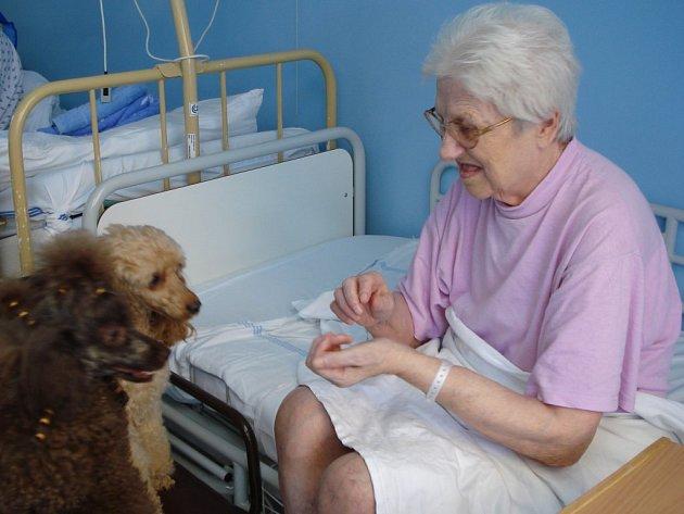 Psi, které nemocnice v Havlíčkově Brodě pro canisterapii využívá, jsou pod veterinární kontrolou.  Na pokoj k pacientům mohou bez problémů.