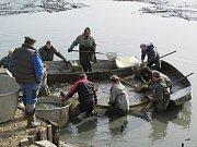 Rybářský spolek Chotěboř, výlov rybníku Eckhardt.