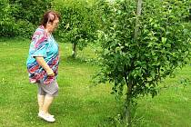 """""""Ráda se v sadu pravidelně procházím a prohlédnu si každý stromek. Zbavím ho škůdců a pochválím ho, jak krásně roste a dělá mi radost. Každý člověk si přeje, aby po něm něco pěkného zůstalo,"""" říká Marie Krajíčková (na snímku)."""