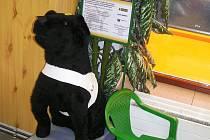 I drobný peníz vhozený do kasičky může pomoci na výcvik psů pro lidi s vadou zraku.