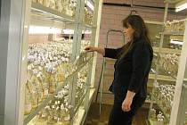 VĚDA. Pro mnoho z nás jsou brambory jen hlízy, které se okopávají na poli motykou. Ve skutečnosti to jsou zajímavé rostliny s bohatou historií, které mají i vlastní genovou laboratoř.