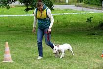"""V pořadí již druhou """"psí"""" soutěž uspořádala v Chotěboři městská policie."""