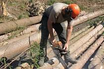 Zpracování polomového dřeva u Jablonné pokračuje. Následky vichřice likviduje několik skupin dřevařů.