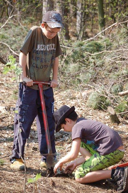 Výsadba stromů. I tu si žáci v lese letos v létě v areálu Rudných dolů vyzkoušeli.