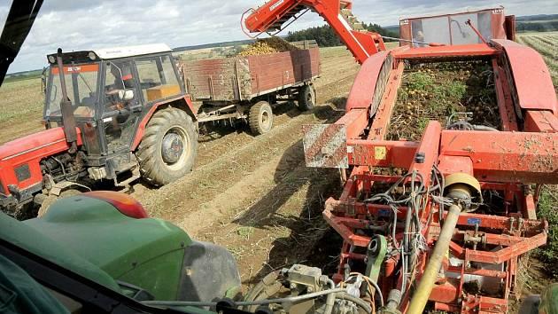 Sklizeň brambor se na Vysočině tyto dny rozjíždí naplno. Hektarové výnosy konzumních brambor by měly být srovnatelné s dlouhodobým průměrem. Na Vysočině se pěstují později sklízené odrůdy, rané brambory dodávají hlavně pěstitelé z jihu Moravy a Polabí.