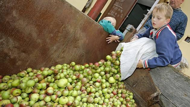 Většinou lidé přivezou do výkupu zhruba šest pytlů. Občas  přijede i traktor s valníkem.