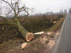 Podél silnice padlo na padesát stromů.
