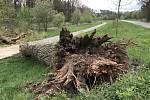 Starý strom padl na cyklostezku