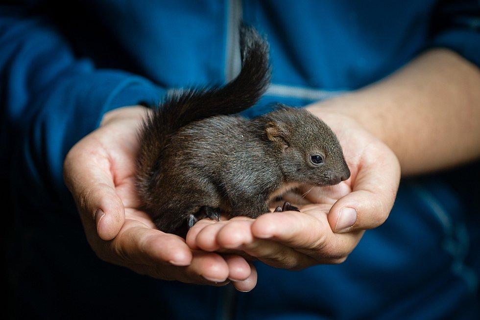 Fotografie několika z mnoha tisíc zvířat, které vyléčili a vykrmili a vrátili zpět do přírody pracovníci Záchranná stanice Pavlov u Ledče nad Sázavou.
