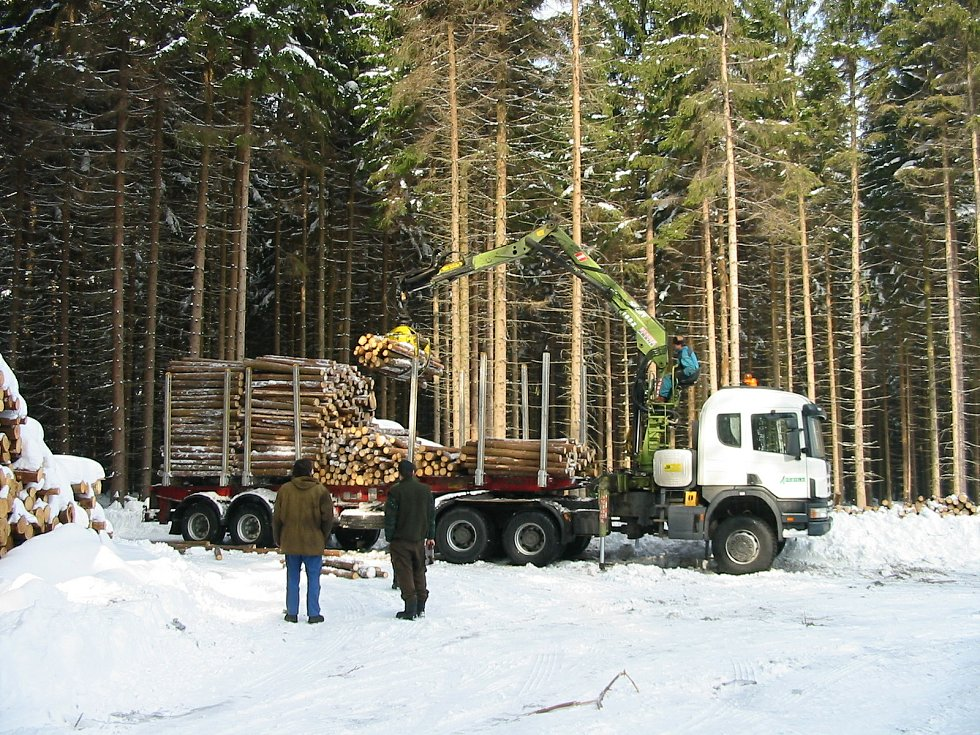 Lesní družstvo obcí Přibyslav bojuje s kůrovcem léta.