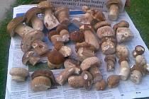 """Někde rostou. Přestože mykologové nejásají, v některých lokalitách houby rostou. """"Je to až neuvěřitelné, ale stále rostou,"""" hlásí  čtenář Deníku ze Šebkovic a se snímkem posílá i varování: """"Rostou i hořčáci,tak ať vám nepokazí celou smaženici."""""""