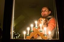 Silvestr a zvířata - výzva