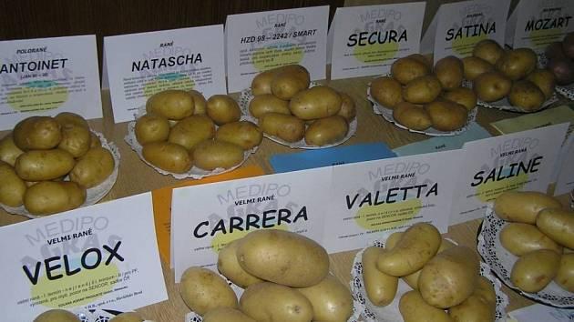 Není brambor jako brambor. Různé odrůdy se liší chutí, vlastnostmi slupky i obsahem škrobu. Mají také rozdílnou odolnost vůči jednotlivým chorobám.