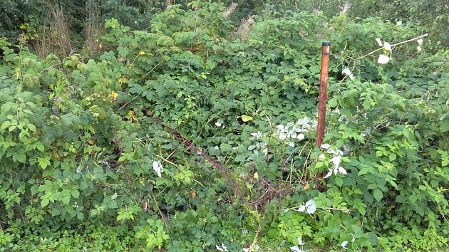 Místo, kde Tomáš Pípa zmatenou a dezorientovanou ženu objevil. Aby ji z těžko prostupného houští vysvobodil, musel rozstříhat plot.