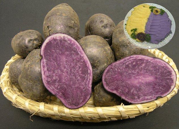 Valfi. Zvláštně zbarvená odrůda byla v České republice registrována v roce 2005, na výstavě Země živitelka byla oceněna hlavní cenou Zlatý klas.  Jenom na   její barvu a na barvu pokrmů z ní připravených si čeští konzumenti teprve zvykají.