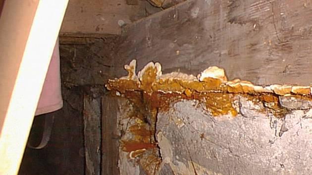 Zbavit se dřevokazné houby není jednoduché.
