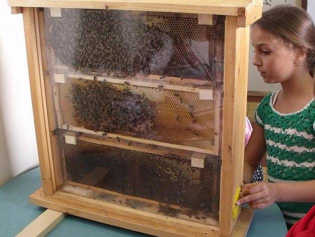Mobilní včelí úl si mohly prohlédnout děti ze štocké základní školy. A se zájmem to také udělaly.