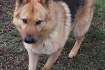 Provoz útulku stojí asi 800 tisíc ročně, díky dárkyni bude o psí bezdomovce dobře postaráno.