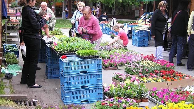 Největší zájem mají zákazníci na Smetanově náměstí o sazenice rajčat, okurek a cuket.
