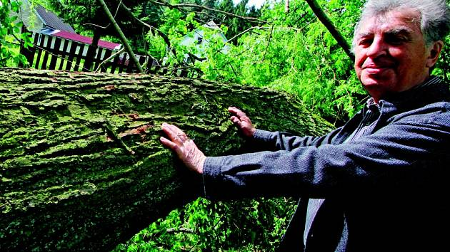 Vichr k zemi poslal staleté stromy.