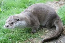 První zvíře, kterému se v Pavlově začali ochránci přírody věnovat, byl bobr. Dnes ve stanici žije celá řada dalších zvířat.  O zážitky tak nebudou mít výletníci nouzi.