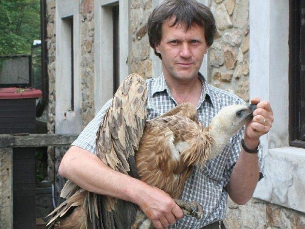 Pozor na zoban. Václav Hlaváč drží nedospělého jedince supa bělohlavého, který se na Vysočinu zatoulal pravděpodobně z Alp. Tam by se měl v dalších týdnech zase vrátit.