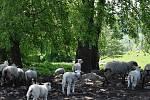 Lidé mířící za agroturistikou najdou ve Věcově u Kadeřávků pravou vesnickou idylku.