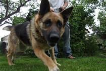 Povinnosti. Venčení psů nepřináší jen zábavu, ale majitelům i povinnosti. Uklidit si po svém mazlíčkovi je pro někoho stále velký problém.