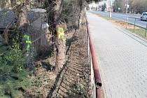 I pruh zeleně je předmětem sporu lidí ze Šubrtovy ulice a havlíčkobrodské radnice.