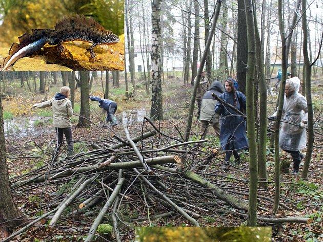 Vše pro čolka velkého. Zhruba dvacítka dobrovolníků se o víkendu pustila do čištění několika chotěbořských tůní, v nichž žije řada vzácných obojživelníků.