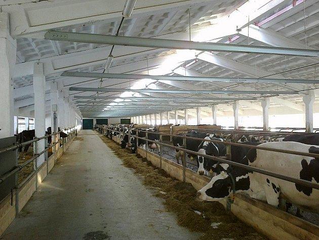 Zrekonstruovaný kravín v Pohledu.