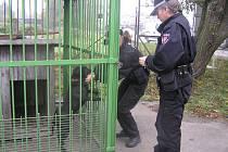 V Chotěboři končí psí tuláci v kotci městské policie. Svoje strážníky ale Přibyslav nemá.
