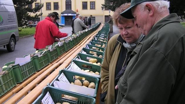 Lidé v pátek před kulturním domem obdivovali na devět desítek vystavených odrůd. Popisky na přepravkách přibližovaly jejich přednosti i zvláštní nároky.
