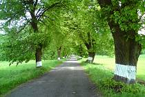 Lipovovou alej v Dolním Bousově revitalizují. Ilustrační foto.
