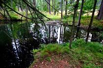 Ranská jezírka na pomezí Havlíčkobrodska a Žďárska se chystají na zimu. Přesličky, kapradiny a plavuně dostávají sytou podzimní barvu, začnou hnít a promění se v humus.