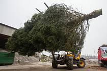 Nakládání vánoční stromu pro transport do partnerského města Brielle.