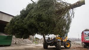 Nakládání vánoční stromu pro transport do partnerského města Brielle