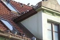 Holubi na střeše vypadají nevinně, ale dovedou nadělat obrovské škody.