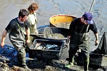 """Přímo v Havlíčkově Brodě se rybáři ze sádek v nedaleké Břevnici """"pustili"""" do jarního výlovu vypuštěného rybníka Kafíčko naproti firmě Zetor. Jednalo se o několik metrických centů kapří násady."""