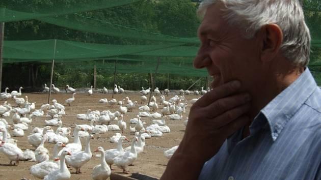 Husám se vede dobře. Zootechnik zemědělského družstva Horní Cerekev Josef Holub si pochvaluje ochranu zelenými sítěmi od loňska. Ale zároveň se netají obavami z proniknutí nákazy. Veterinárních opatření je celá řada.