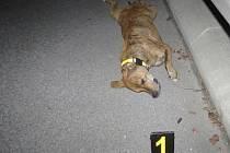 Policisté prosí veřejnost o pomoc při hledání majitele psa.