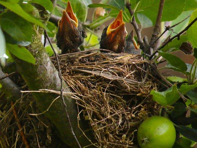 Ptačí rodinka.