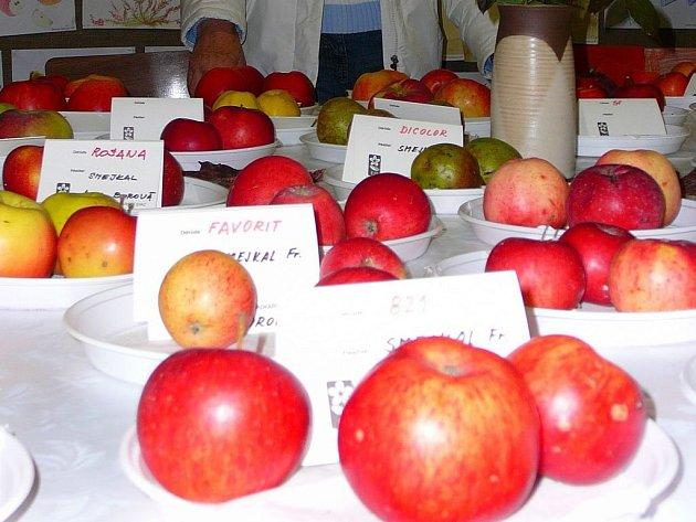 Výstava ovoce. Jablka desítek odrůd byla k vidění ve sklepení pod radnicí.