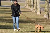 Na chemicky ošetřených plochách není dobré se pohybovat či venčit psy. Ilustrační foto.