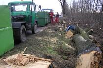 Začalo kácení. Do stromů u silnice I/38 se nedávno zařízly pily. Zatím podle starostů ale jenom do stromů nemocných.